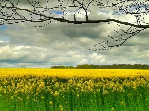 Stonhenge, England