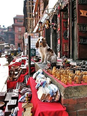 Sales(man)dog