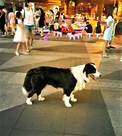 Shopper Dog