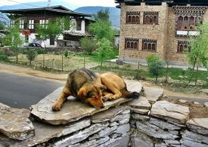Stress-free Dog