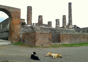 "These dogs were ""touring"" Pompeii in Italy"
