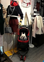 Fashionista Dog - at first I thought this dog was a stuffed toy or figurine, but when I was about to go nearer, I heard the growl. :))