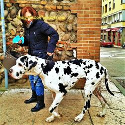 Mama's (boy) Dog